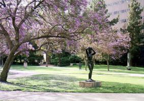 Ucla Campus Map Murphy Sculpture Garden